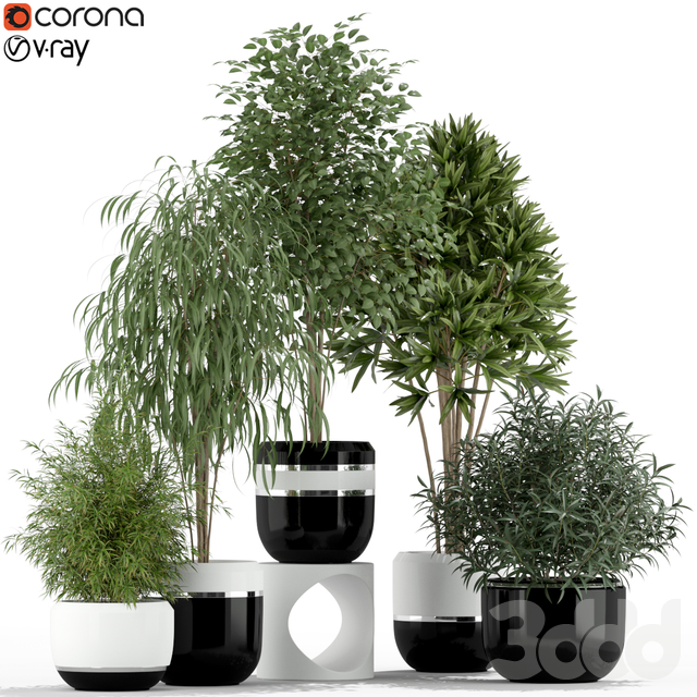 Plants collection 230