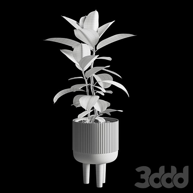 Indoor Plants Set 08