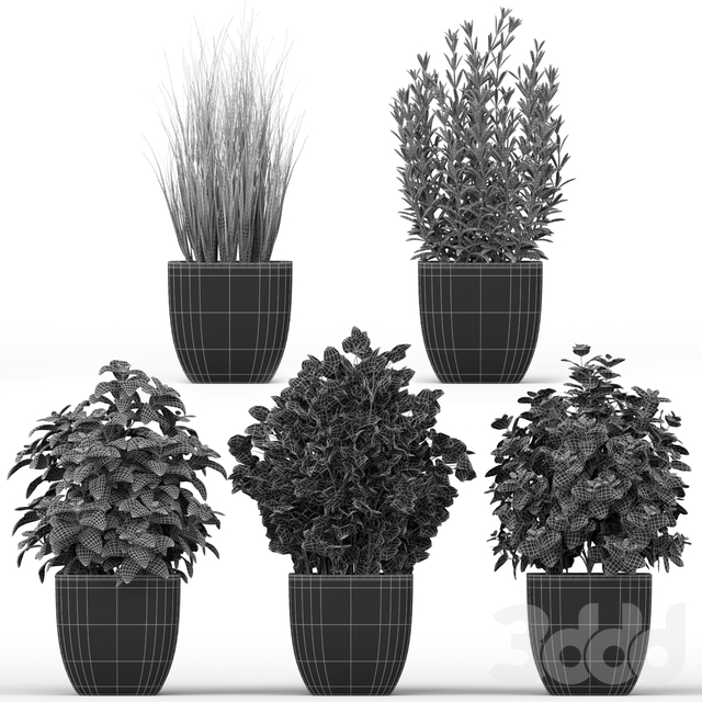 Plants collection 232