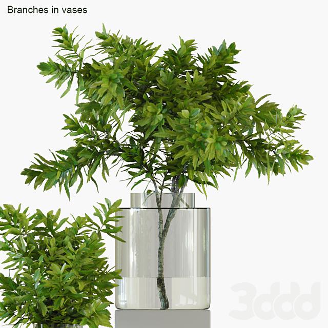 Branches in vases 32 : Banksia plagiocarpa