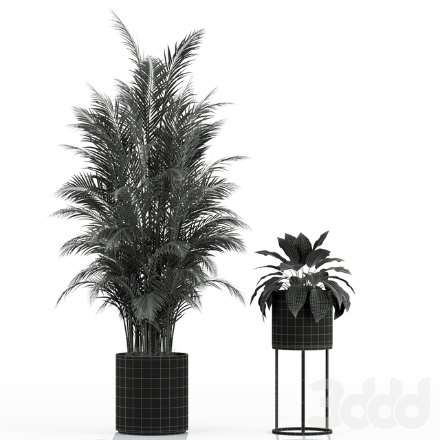 Plants collection 234