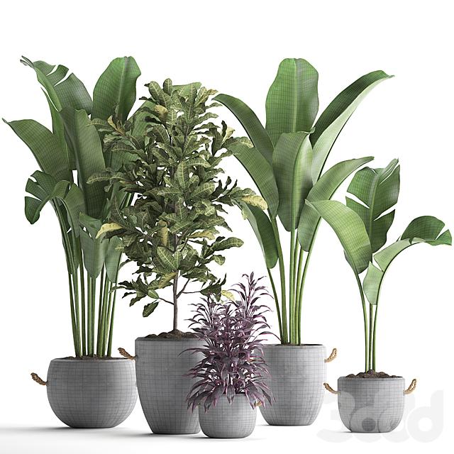 Коллекция растений 438.