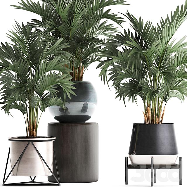 Коллекция растений 442.