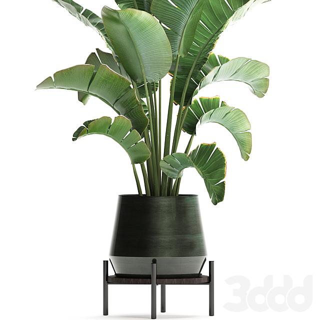 Коллекция растений 446.