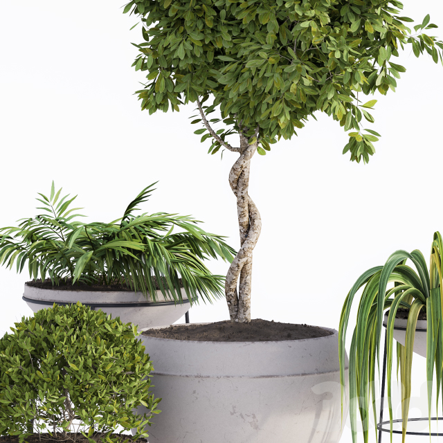 Outdoor Plants Full Set