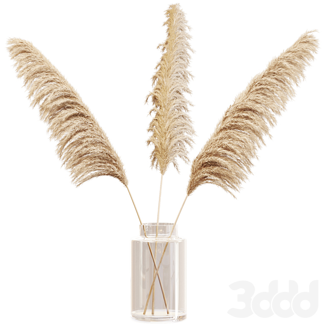 Dry branches of pampas grass in glass vase