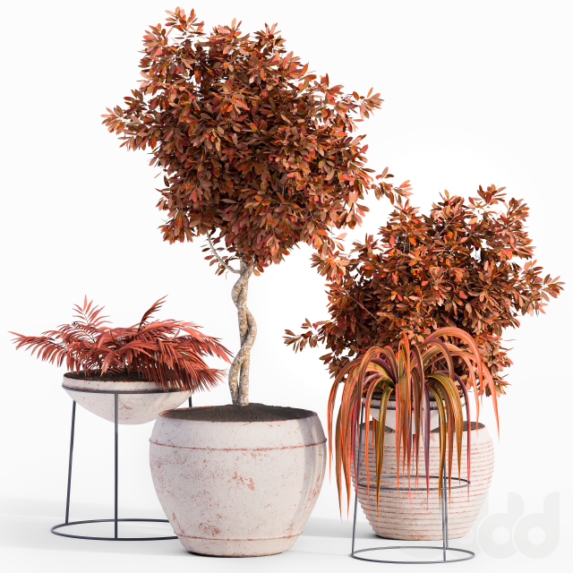 Outdoor Plant Red Set