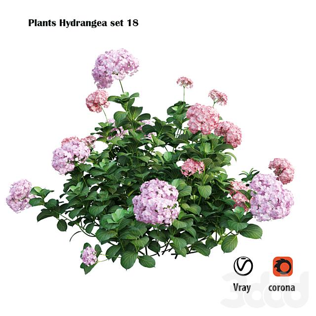 Plants Hydrangea set 18