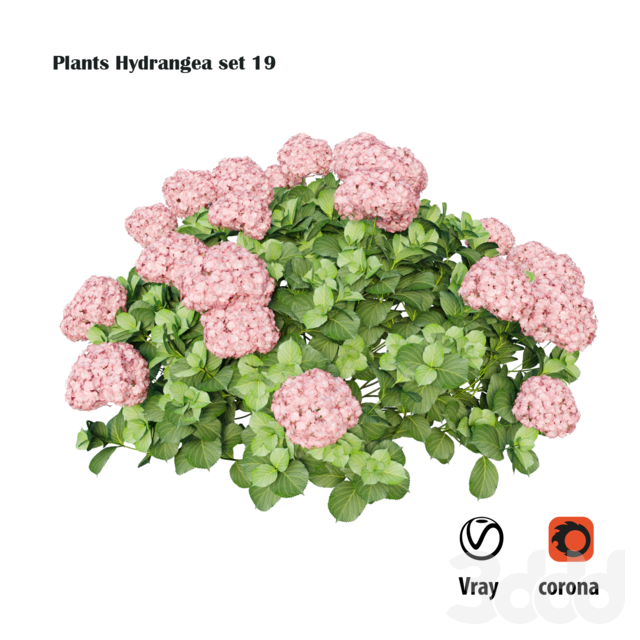 Plants Hydrangea set 19