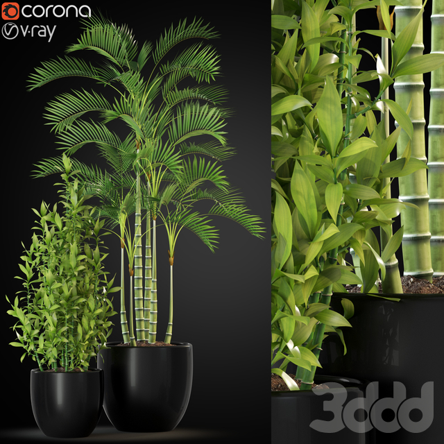 Plants collection 263