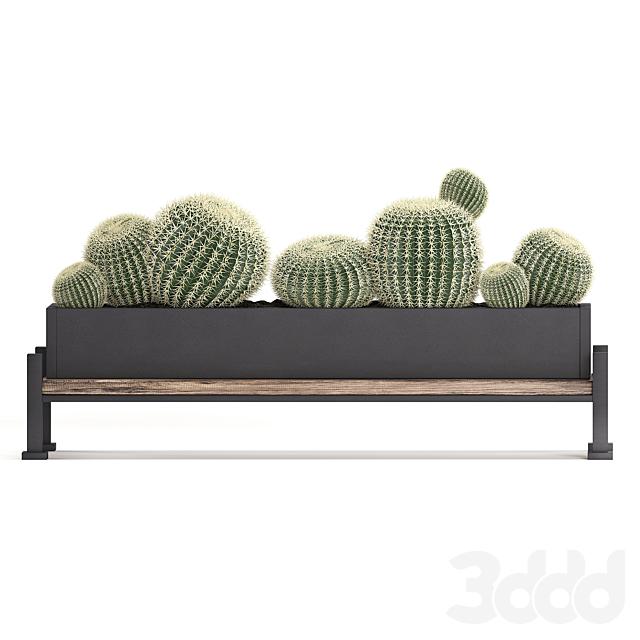 Коллекция растений 462.