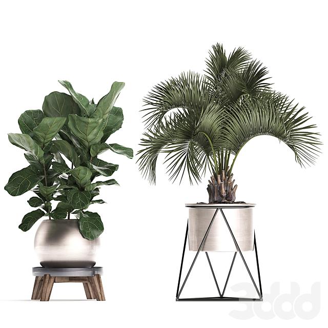 Коллекция растений 463.