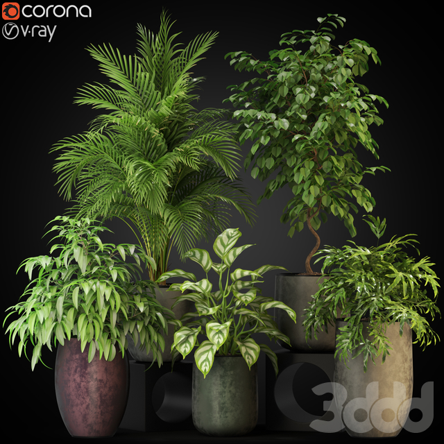 Plants collection 269