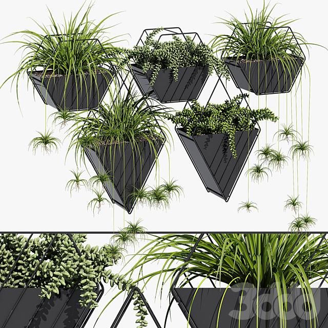 Tulane hanging planter