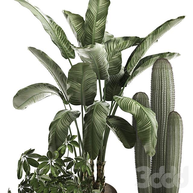 Коллекция растений 468.