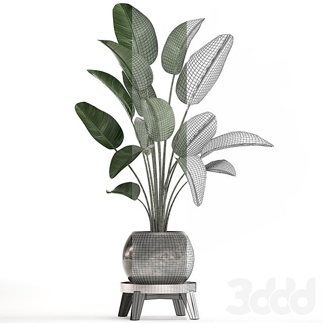 Коллекция растений 469.