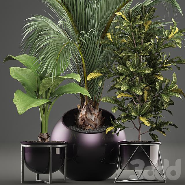 Коллекция растений 470.