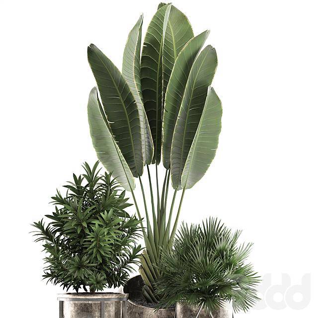 Коллекция растений 471.