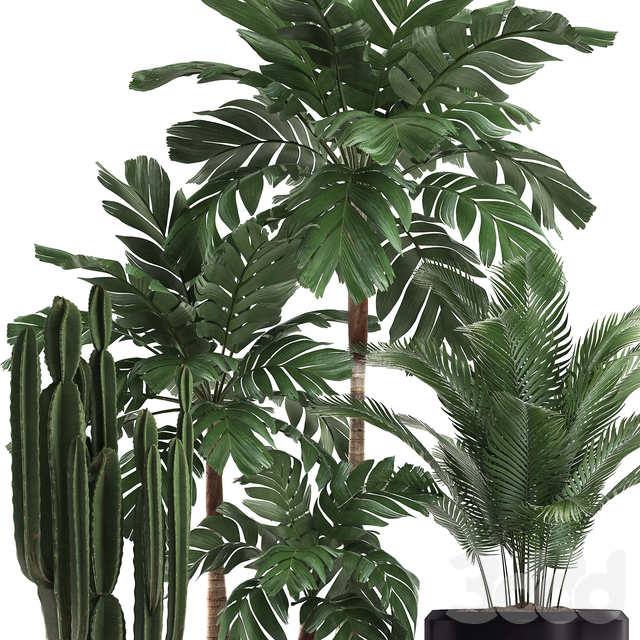Коллекция растений 472.