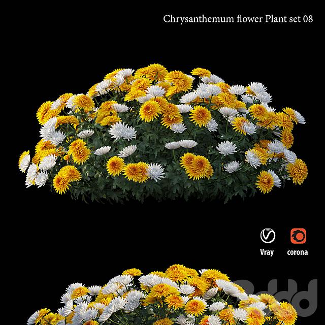 Chrysanthemum flower Plant set 08