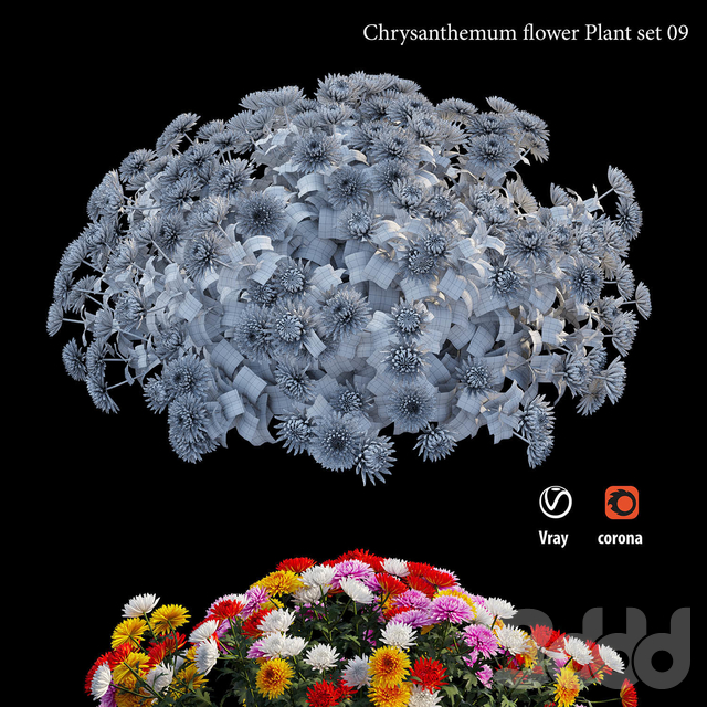 Chrysanthemum flower Plant set 09