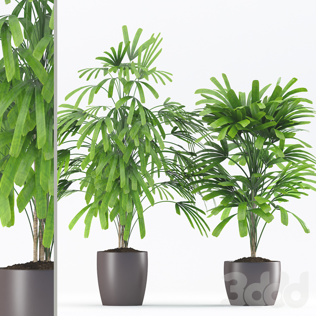 Plants 187