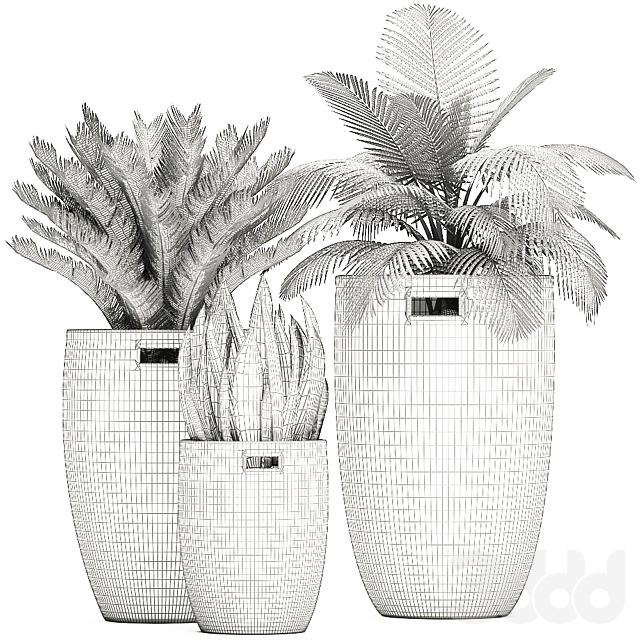 Коллекция растений 481.