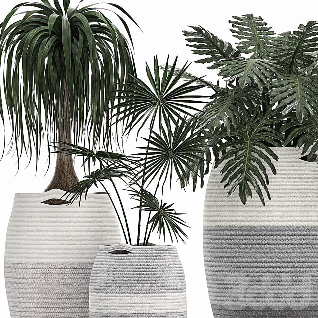 Коллекция растений 482.