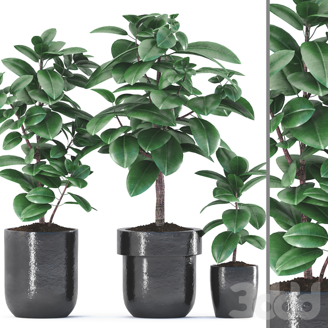 Plants 190