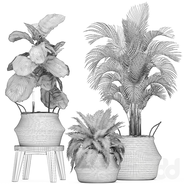 Коллекция растений 486.