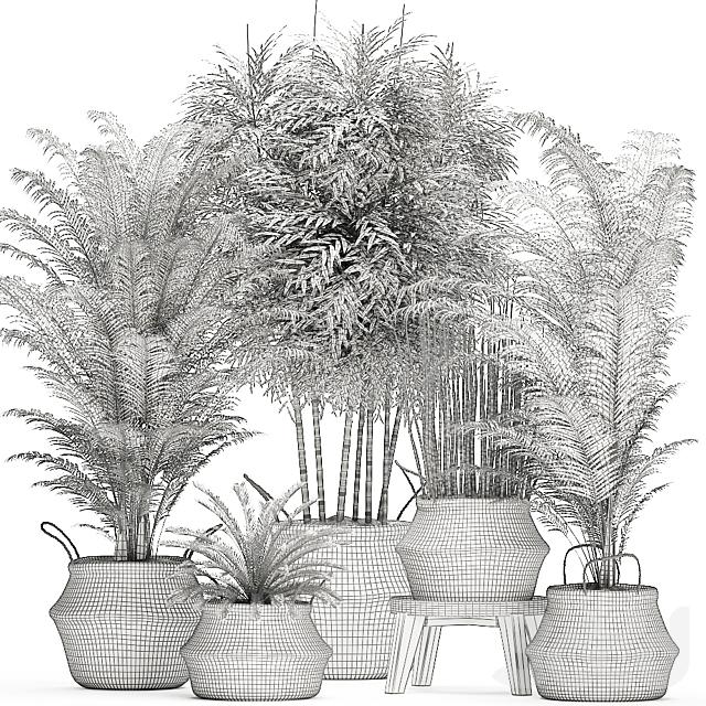 Коллекция растений 489.