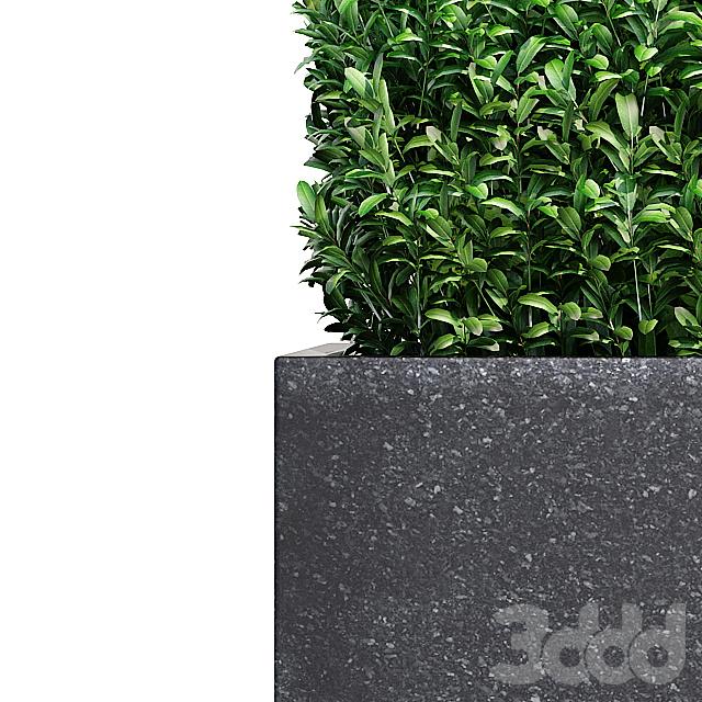 plants 266