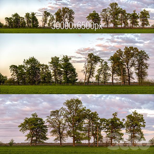 Панорама с деревьями. Закат