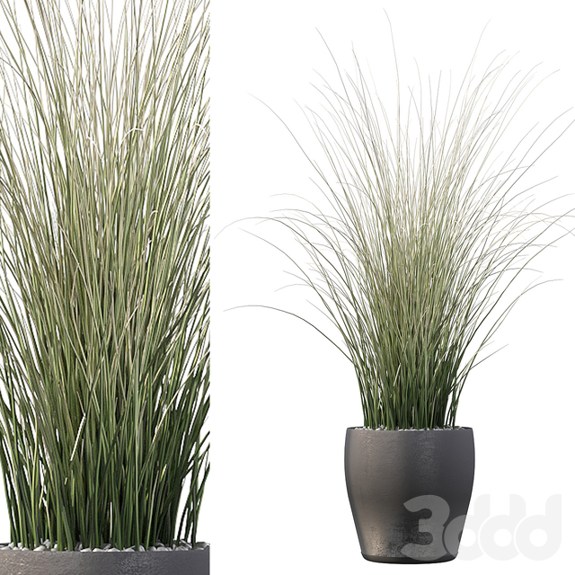 Plants collection 024 - Grass 01