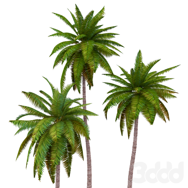 Palms low poly
