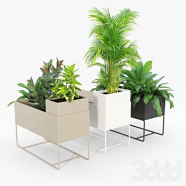 Plant Box - Large
