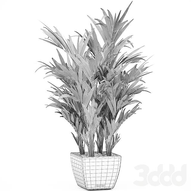 Коллекция растений 564.
