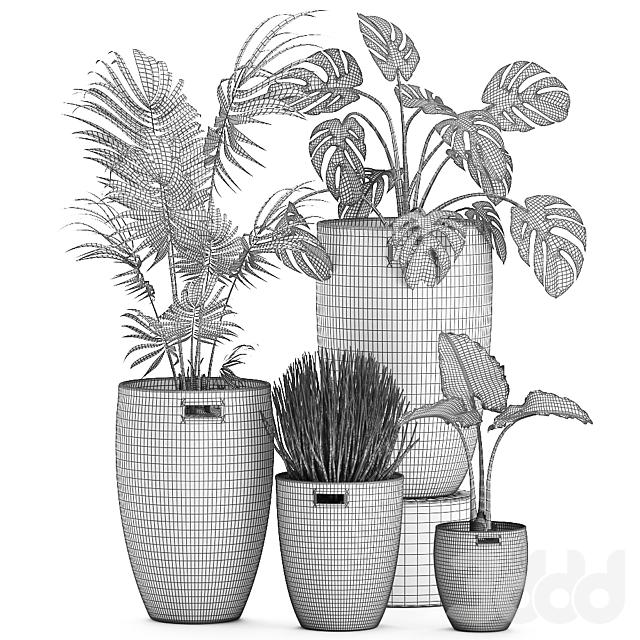 Коллекция растений 570.