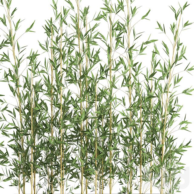 Коллекция растений 581.