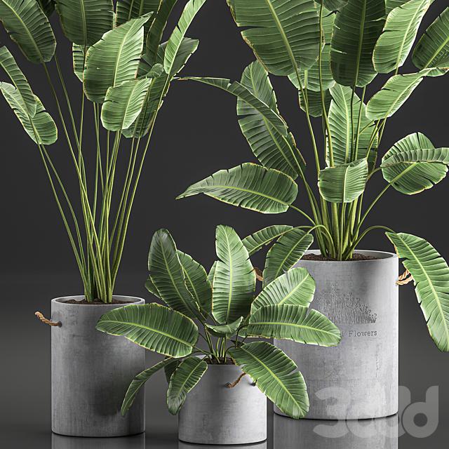 Коллекция растений 592.