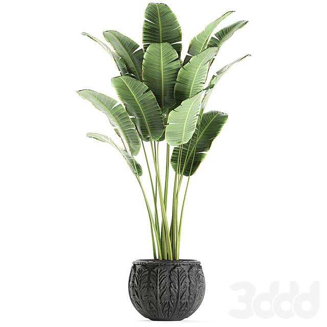 Коллекция растений 593.