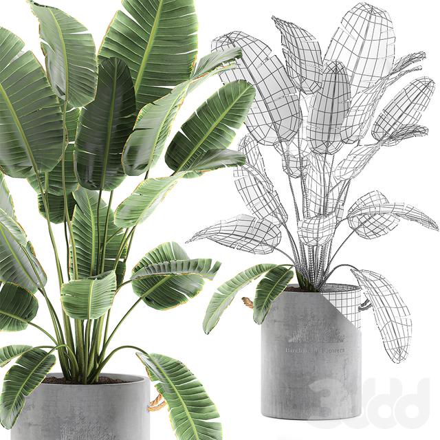 Коллекция растений 594.