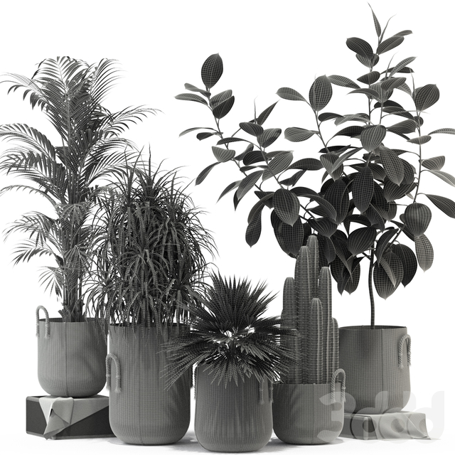 Plants collection 334