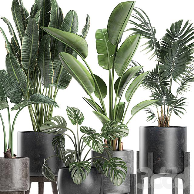 Коллекция растений 659.