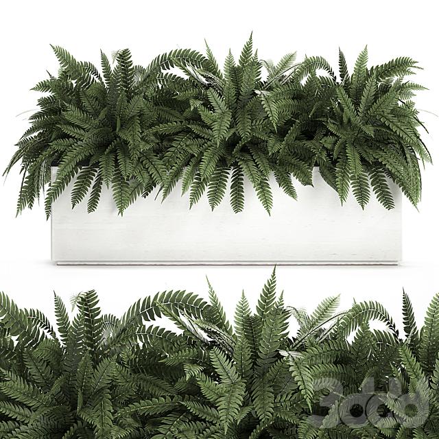 Коллекция растений 673.