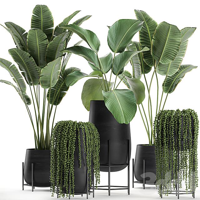 Коллекция растений 700.