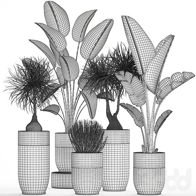 Коллекция растений 707.