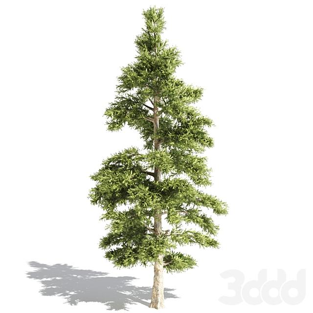 set of tree016-corona
