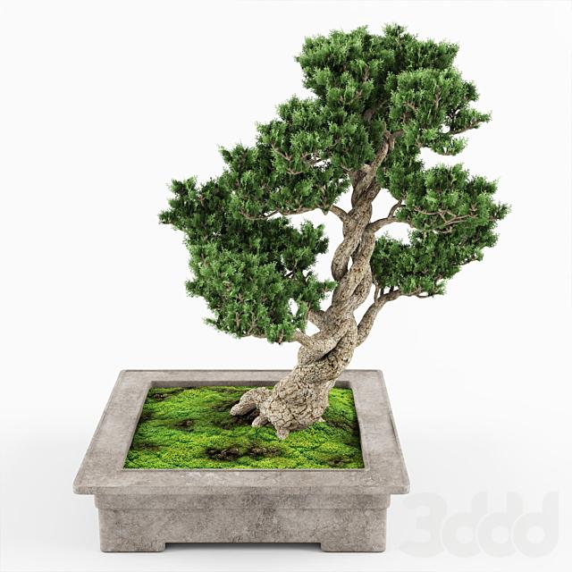 Bonsai decorative tree 04