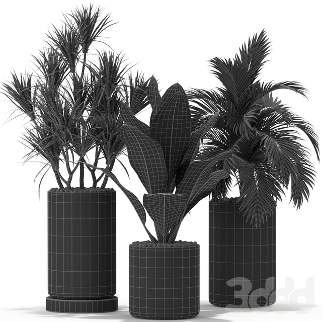 Plants collection 377
